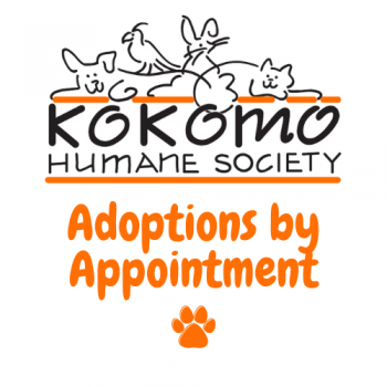 adoptions by appointment
