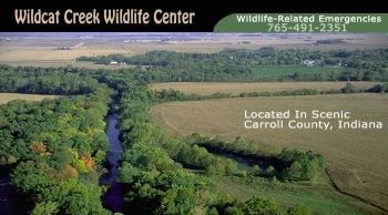 Wildcat Creek Wildlife Center