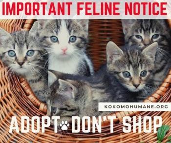 Feline Notice